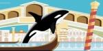 venice killerwhales